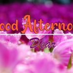 Good Afternoon Images photo download