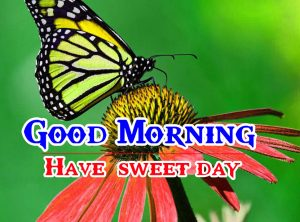Good Morning HD Images Pics for Whatsapp