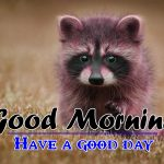 Good Morning HD Images Wallpaper Download Free