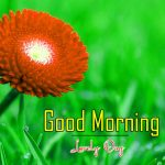 Good Morning Pics Download