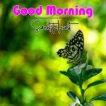 Good Morning Pics Download Free