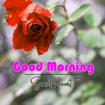 Rose Latest Good Morning Images