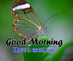 Good Morning HD Images Wallpaper Free for Facebook