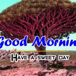 Good Morning 4k HD Images photo download