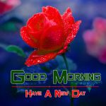 Good Morning Wishes Images With Flower