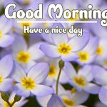 Good Morning Flowers Images photo download