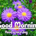 Good Morning Flowers Images photo hd