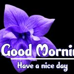 Good Morning Flowers Images wallpaper download