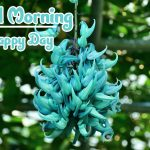 Good Morning Flowers Images photo hd download