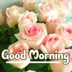 Good Morning Flowers Images pics hd
