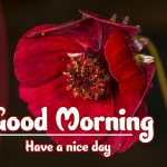 Good Morning Flowers Images pics free download