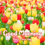 Good Morning Flowers Images photo free hd