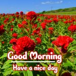 Good Morning Flowers Images pictures photo hd download