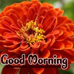 Good Morning Flowers Images pictures free download