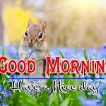 Good Morning Images Pics Wallpaper Free
