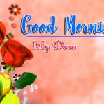 Good Morning Images Wallpaper Pics With Rose
