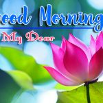 Flower Good Morning Images Pics Download HD