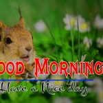 144+ Good Morning Images HD 1080p Download