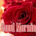 Good Morning Red Rose Images pictures free download