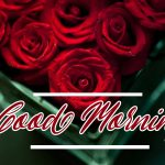 Good Morning Red Rose Images photo hd download