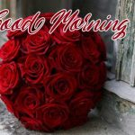 Good Morning Red Rose Images photo download