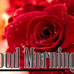 Good Morning Red Rose Images pictures hd