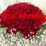 Good Morning Red Rose Images pictures hd download