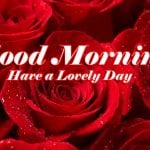 Good Morning Red Rose Wallpaper Free Download