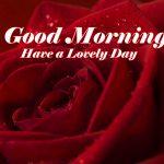 Good Morning Red Rose Images wallpaper download