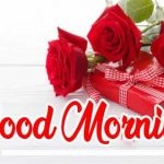 Good Morning Red Rose Images pictures free hd