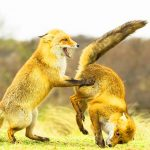HD Funny Animal Free Download