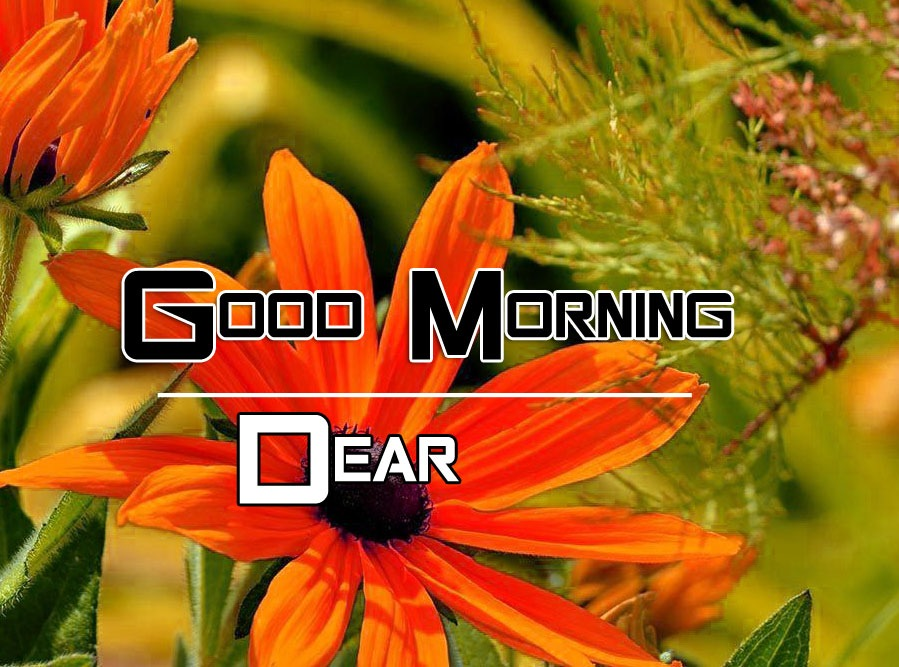 Happy Good Morning Images photo hd