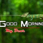 1392+ Free Best Happy Good Morning Images HD Download