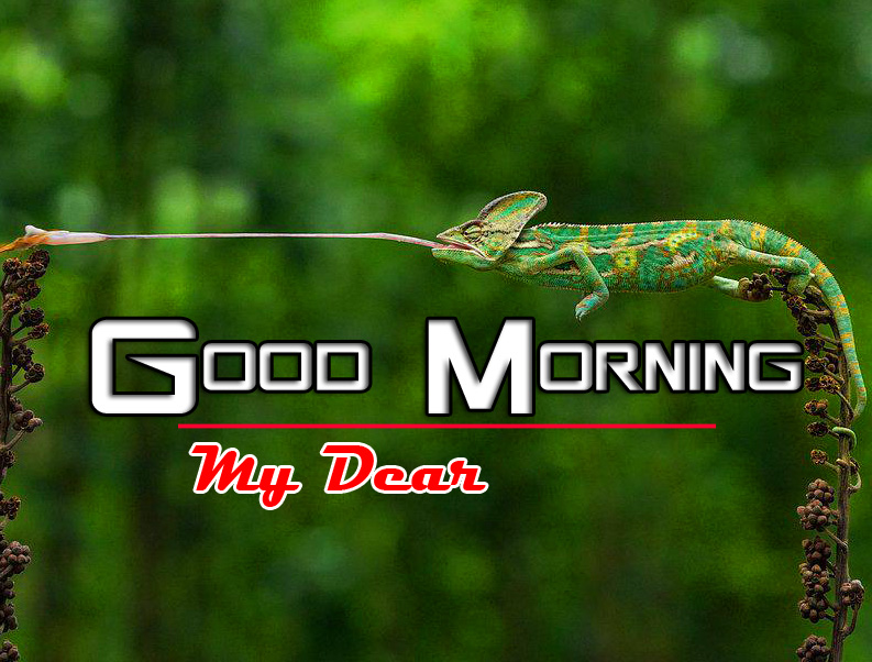 Happy Good Morning Pics Photo