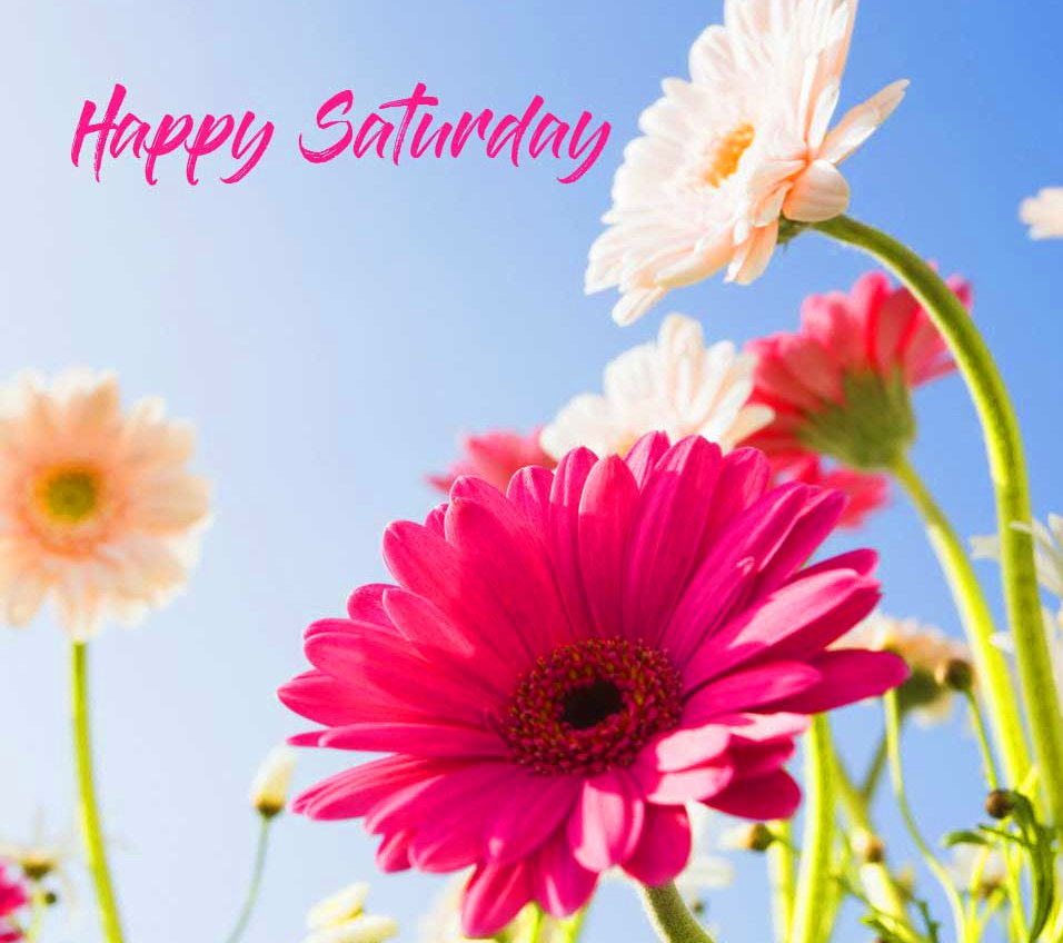 Flower Free Happy Saturday Good Morning Images Pics Download