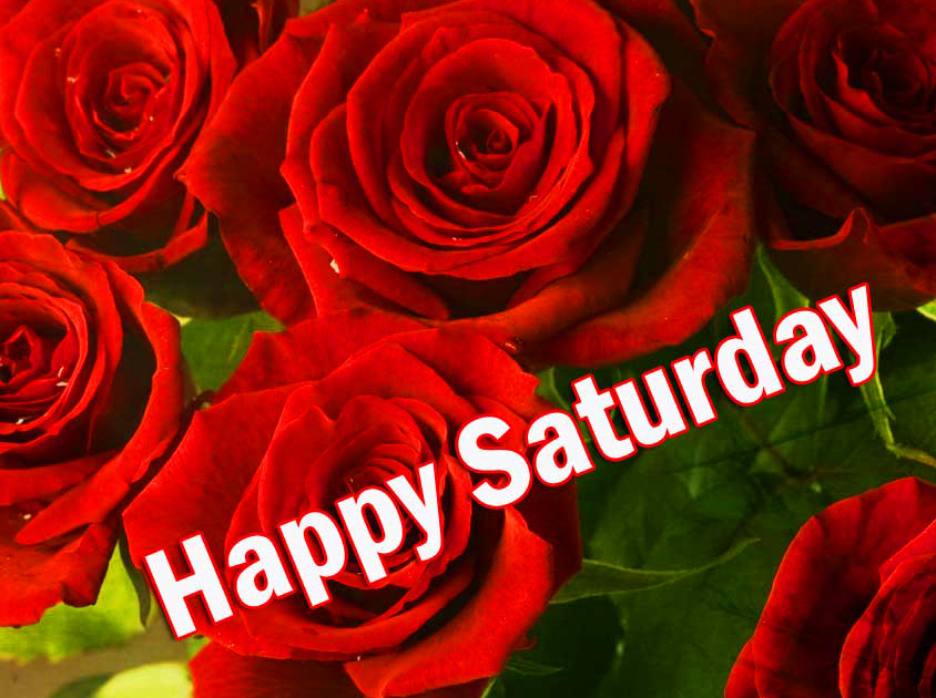 Happy Saturday Good Morning Images Pics With Red Rose
