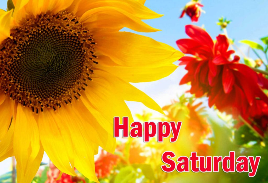 Happy Saturday Good Morning Images Wallpaper Free Latest