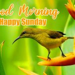 happy sunday good morning images photo pictures free download