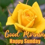 happy sunday good morning images pics photo hd
