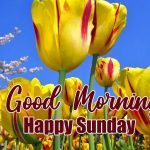 happy sunday good morning images pictures free hd