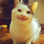 Hd Free Download Free Funny Cat Images