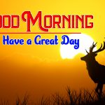 Hd Free Download Happy Good Morning Pics