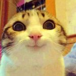 Hd Free Funny Cat Images Photo