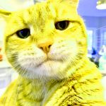 Hd Funny Cat Free Download