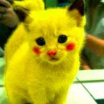 Hd Funny Cat Pics For Whatsapp