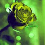 Heart Touching Whatsapp Profile Images