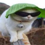 Images Hd Funny Cat Photo