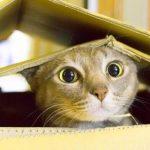Latest Free Funny Cat Photo Free Pics