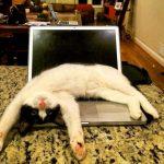Latest Funny Animal Photo Wallpaper