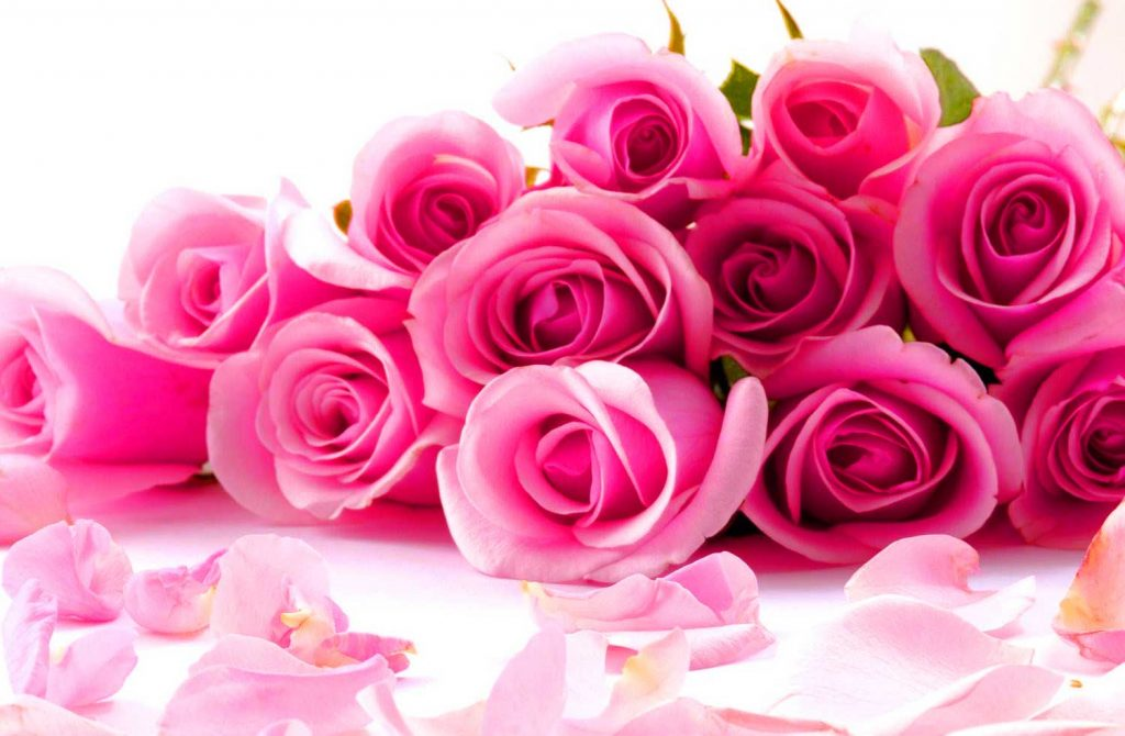 Free Latest Whatsapp Dp Images Wallpaper With Rose